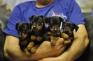 puppy_5